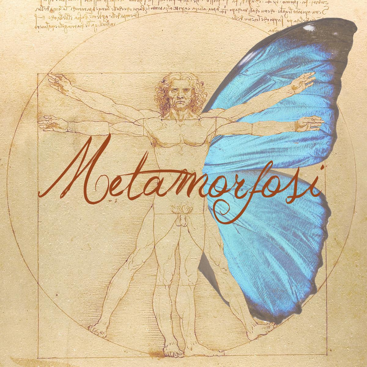 """Dal seme al fiore. Metamorfosi""  Labirinto Effimero 2014"